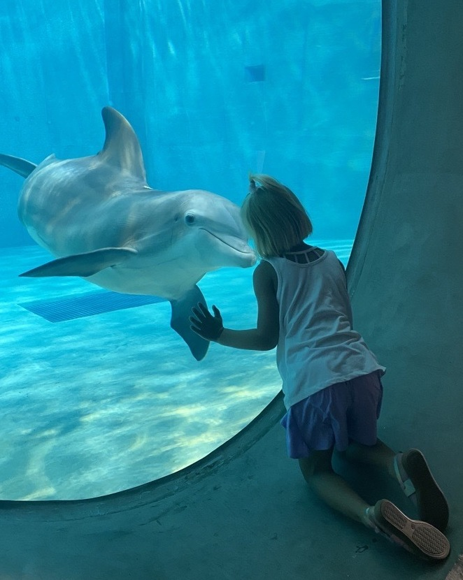 Nicholas the Dolphin at window with guest at CMA